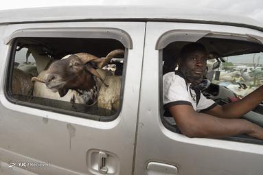 عید قربان در نیجریه