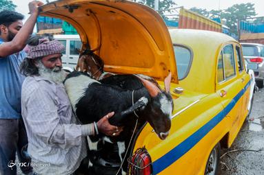 عید قربان در هند