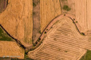 کشاورزان فراموش شده