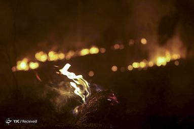 آمازون در آتش