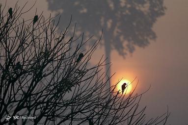 طلوع خورشید در آتش سوزی جنگل آمازون در نزدیکی پورتو ولوو، برزیل