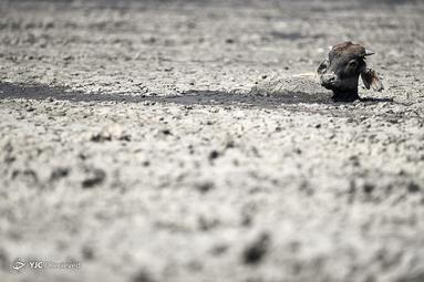 خشکسالی در منطقه دریاچه نگامی در نزدیکی ماون، بوتسوانا