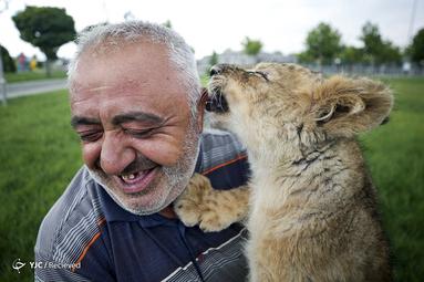 توله شیر به نام پوسات در باغ وحشی در کایزری ترکیه