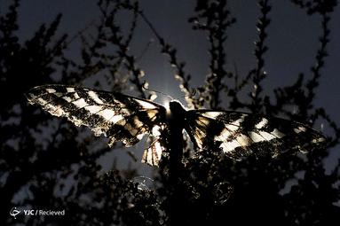 یک پروانه روی یک درخت در لس آنجلس، کالیفرنیا