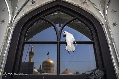 عزاداری تاسوعای حسینی در حرم مطهر رضوی