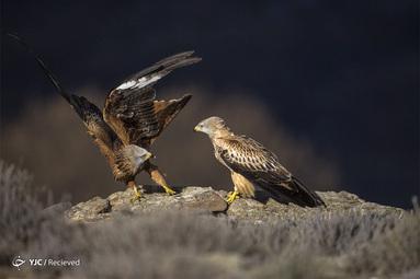 شرکت کننده در بخش طبیعت و حیات وحش