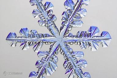 دانه برف توسط Caleb Foster
