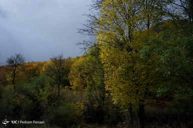 طبیعت پاییزی جنگل سیاه بیشه