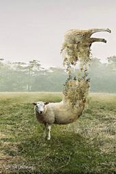 سورئال حیوانات با فتوشاپ