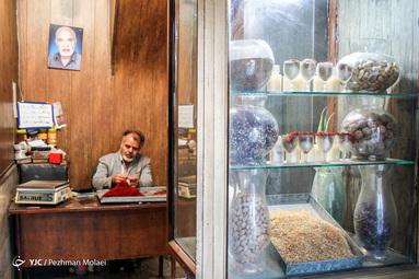 روزهای آخر برداشت زعفران در تربت حیدریه