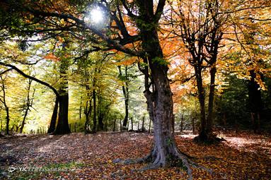 پاییز النگدره و هزار جریب