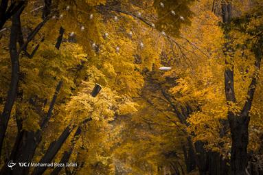 پاییز در چهارباغ اصفهان