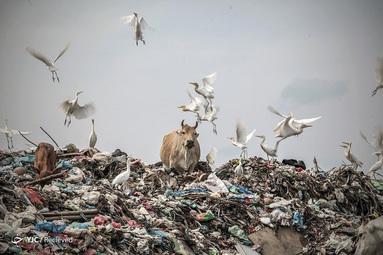 محل دفن زباله در استان آچه، اندونزی