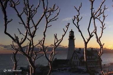 شاخه های درخت یخی در پارک فورت ویلیامز در کیپ الیزابت، ماین