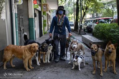 آرماندو گارسیا یک کارگر مسئول پیاده روی بردن سگ ها در مکزیکوسیتی است. او معتقد است که کارش به کاهش استرس سگ هایی که صاحبانشان در قرنطینه بسر می برند کمک می کند