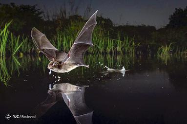 Piotr Naskrecki / BigPicture مسابقه عکاسی جهان طبیعی