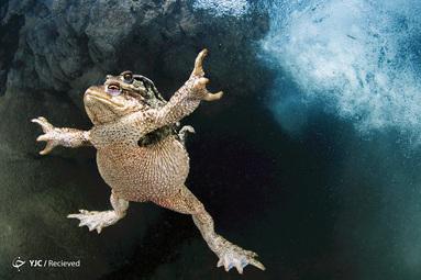 Mathieu Foulquié / BigPicture مسابقه عکاسی جهان طبیعی