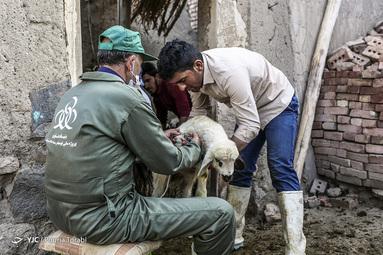 طرح ملی واکسیناسیون دام سبک در مناطق محروم توسط بنیاد علوی