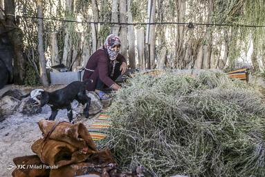 زندگی عشایر استان فارس
