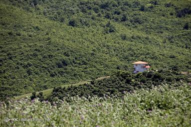 ویلا سازی در جنگل های مازندران