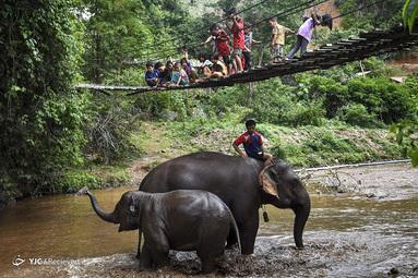 کودکان در حال مشاهده حمام کردن یک فیل مادر و جوان در روستای Baan Na Klang، در استان شمالی تایلند Chiang Mai