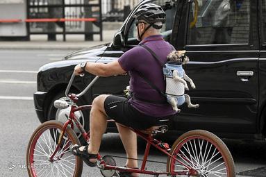 دوچرخه سواری است با یک سگ در لندن