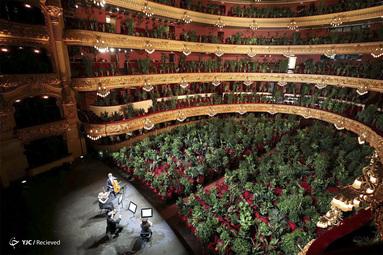 کنسرت برای گیاهان در بارسلونا، اسپانیا