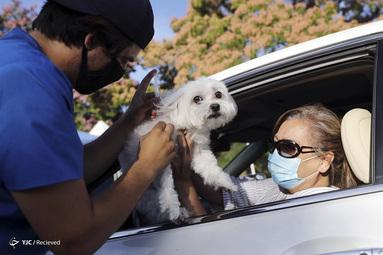 واکسن حیوانات خانگی در مرکز خدمات حیوانات Mission Viejo، در Mission Viejo، کالیفرنیا