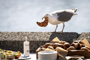 یک مرغ دریایی در کپنهاگ، دانمارک