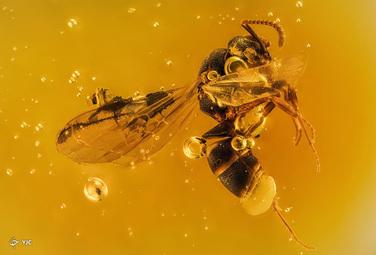 یک مورچه بالدار 20