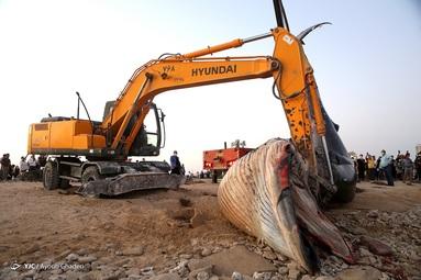 مرگ نهنگ به گل نشسته - جزیره کیش
