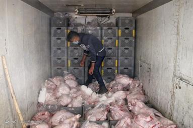 توزیع گسترده مرغ گرم ۱۲ اسفند ۹۹ در تره بار