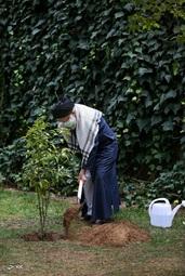 بهمناسبت روز درختکاری، حضرت آیتالله خامنهای در محوطهی دفتر رهبری دو نهال میوه کاشتند